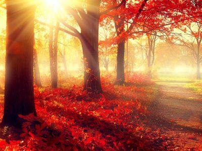 Proč stromům na podzim opadávají listy?