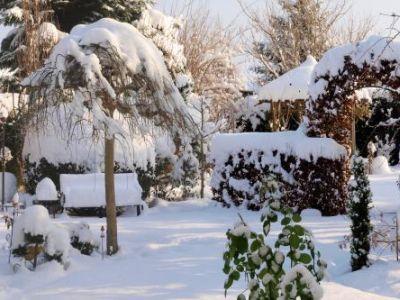 Ometat v zahradě z rostlin sníh a nebo ne?