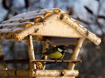 8 rad jak si připoutat ptáky k zahradě