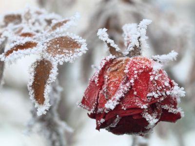 Rozkvetlá zahrada v zimě