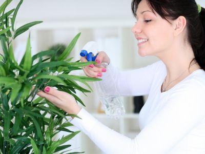 Jak zvýšit vlhkost vzduchu pokojovým rostlinám