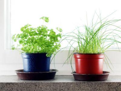 Jak v zimě bylinkařit