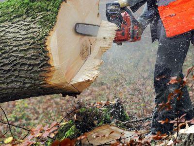 Logo Jak správně pokácet strom