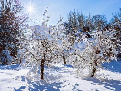 Jak v zimě pečovat o zahradu