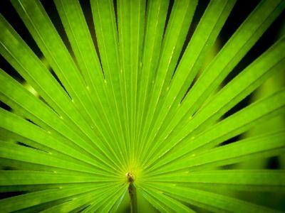 Logo Jak zajistit, abybyla vaše palma vdobré kondici?