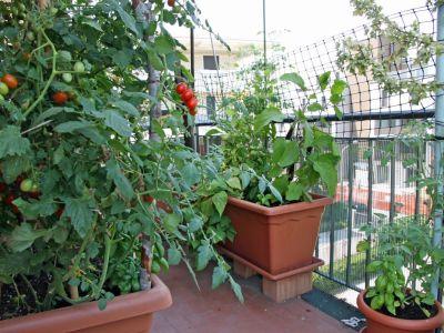 Jak si udělat miniaturní zahradu