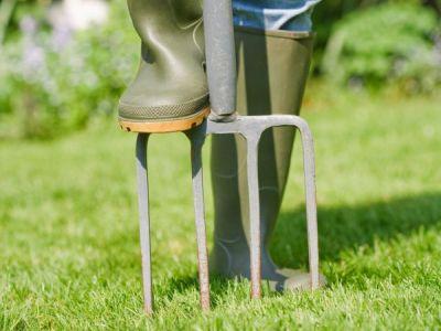 Jak po zimě zrenovovat trávník?