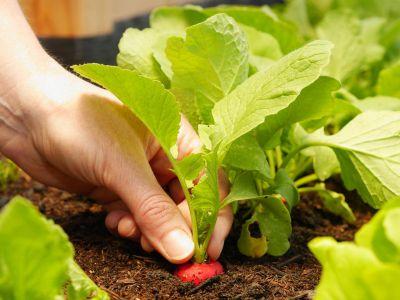 Tipy pro jarní zahradu