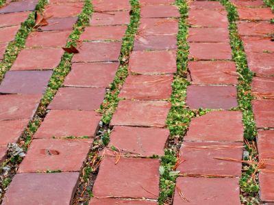 Jak bojovat s plevelem na chodníku
