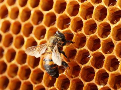 Znáte léčivý med?