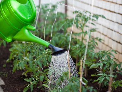 Logo Jak zalévat zahradu správně aefektivně