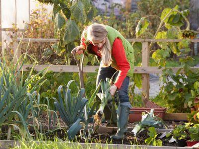 Zahradničení v padlém ráji