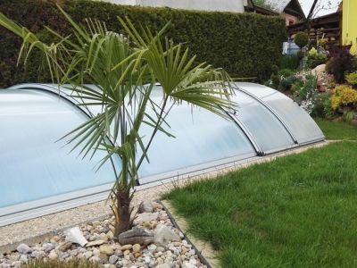 Logo Mrazuvzdorné palmy vzahradě