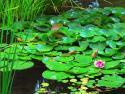 Voda a vodní plochy v zahradě