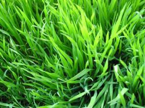 Detail trávníku