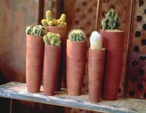 Kaktusy.