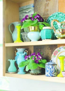 Foto Holandská květinářská kancelář. Sinningia.