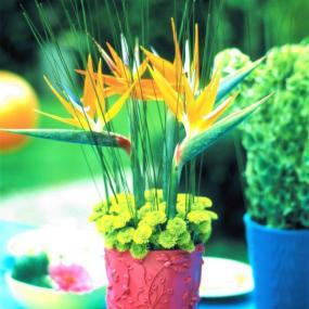 Strelície a chryzantémy na každou letní párty.