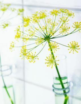 Foto Holandská květinářská kancelář. Anethum.