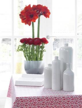 Foto Holandská květinářská kancelář. Hvězdníky a pryskyřníky