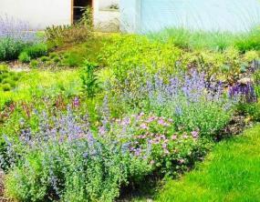 Foto Imramovský - vegetační úpravy