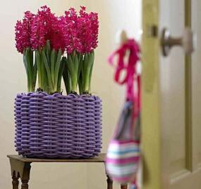 Foto: Holandská květinová kancelář