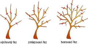 Řez ovocných stromů video