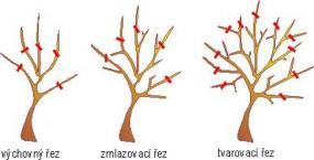Řez ovovných stromů