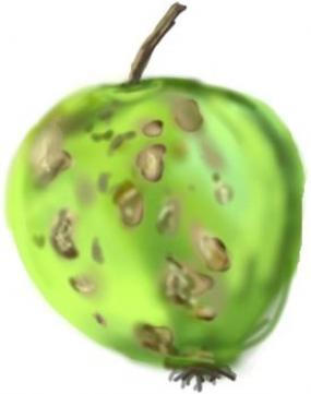 Strupovitost jablka
