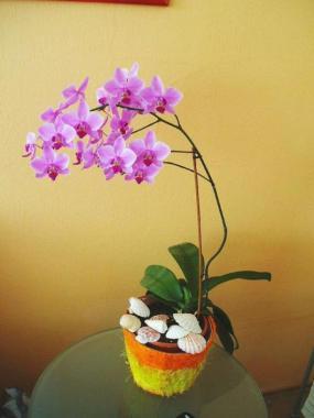 Foto: ČESKÉSTAVBY.cz, Phalaenopsis - orchidej