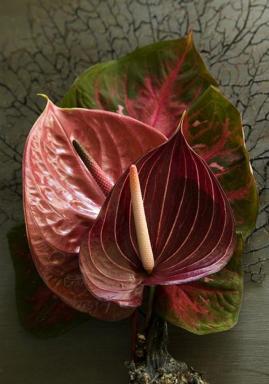 Foto: Holandská květinářská kancelář