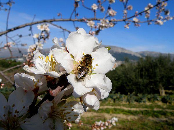 Ilustrační foto (www.shutterstock.com), i užitečná včela patří do přírody, ne do našeho bytu