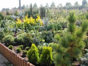 Foto: Zahradnictví - ANTIARIS