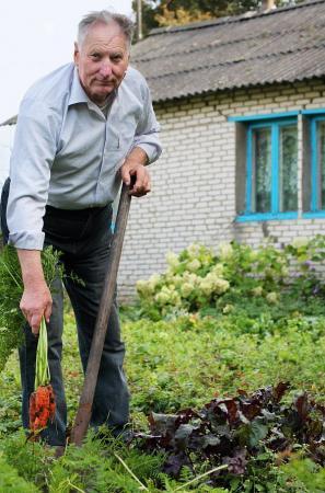 Mrkev (zdroj: www.shutterstock.com)