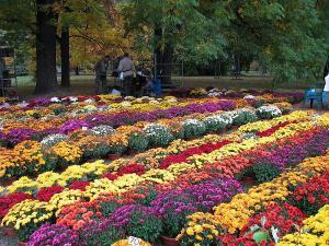 Foto: Flora Olomouc