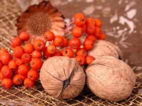 Ilustrační foto (www.shutterstock.com), ořechy a jeřabiny