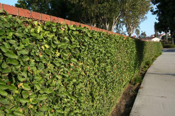 Před zděným plotem je předsazen živý, ilustrační foto (www.shutterstock.com)