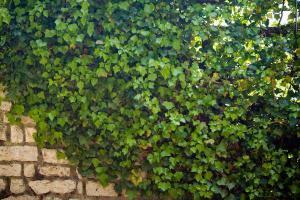 Kamenný zděný plot, ilustrační foto (www.shutterstock.com)