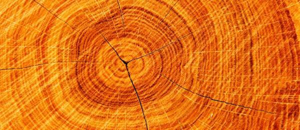 Ilustrační foto (www.shutterstock.com), průřez polenem