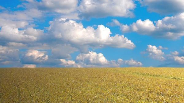 Ilustrační foto (www.shutterstock.com), obilné pole
