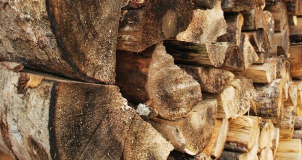 Ilustrační foto (www.shutterstock.com), březové dřevo - důkladně vysušené je pro vytápění ideální