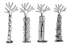 Ochrana stromků