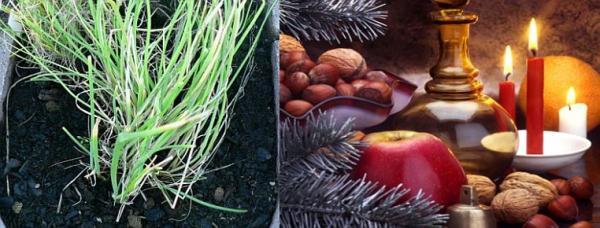 Pažitka a vánoční výzdoba s plody zahrady
