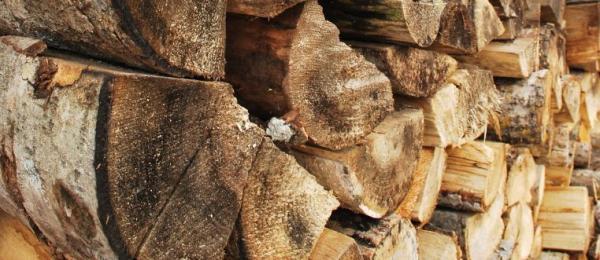 Ilustrační foto (www.shutterstock.com), březové dřevo
