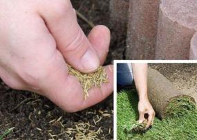 Ilustrační foto (www.shutterstock.com), ruční setí versus pokládka travního koberce