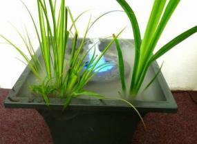 Foto: PEMAČAS, dekorační zvlhčovač pro bahenní rostliny