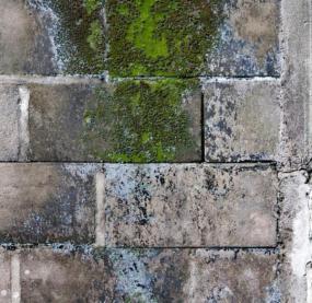 Ilustrační foto (www.shutterstock.com), extrémní důsledky nadměrné vlhkosti