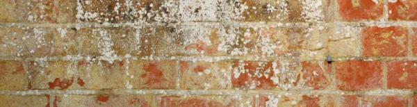 Ilustrační foto (www.shutterstock.com), důkazy vysoké vlhkosti ve zdivu