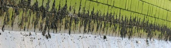 Ilustrační foto (www.shutterstock.com), nejen stěny domů podléhají
