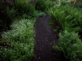 Lesní cestičky lemuje mařinka vonná a kapraď - tak jako v přirozených společenstvech.